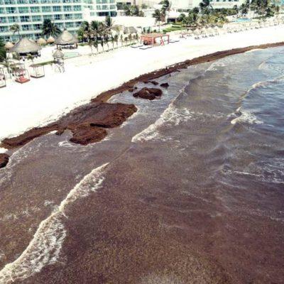 Anuncia Semarnat que retirarán el sargazo de las playas de Quintana Roo con maquinaria especializada, pero hasta noviembre