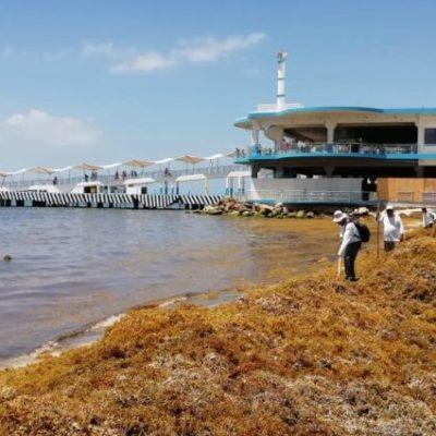 Moce Yax Cuxtal se une a las acciones contra el sargazo; iniciarán jornada de limpieza de playas del 8 al 10 de agosto en Playa del Carmen