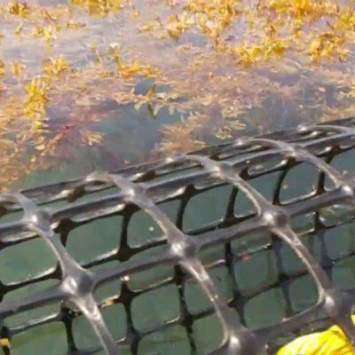 Retrasan la colocación de barreras para contener el sargazo