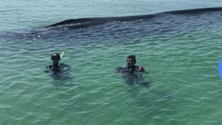 Rescatan ballena varada en una playa de Isla Contoy