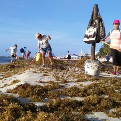 Más de 30 voluntarios se suman a la limpieza de playas convocada por Moce Yax Cuxtal en Playa del Carmen