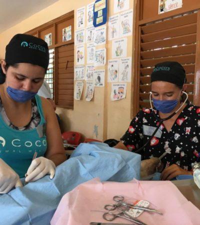 La asociación civil Coco's Animal Welfare invita a la campaña de esterilización gratuita de perros y gatos en Villas del Sol