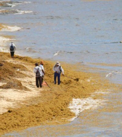 Zofemat pide no enterrar el sargazo en Playa del Carmen; los reincidentes serían denunciados a la Profepa