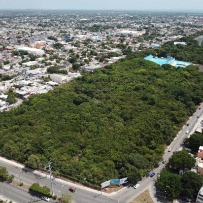 AMENAZA PDU ÁREAS VERDES DE CANCÚN: Denuncian cambios en ciernes que devastarían extenso predio entre la Avenida Kabah y la alberca olímpica