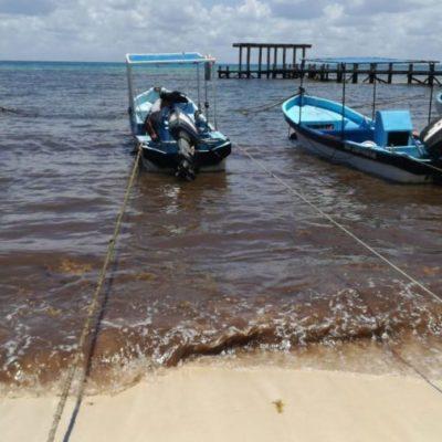 Inician la instalación de los prototipos de barreras antisargazo en El Recodo, en Playa del Carmen