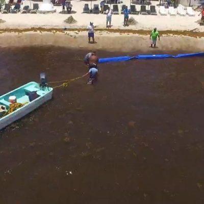 Continúa colocación del prototipo de barreras antisargazo en Playa del Carmen