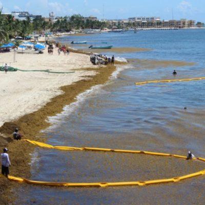 Gobierno paga 11 mdp a Grupo Arco para contener el sargazo, pero la empresa sigue fallando; empleados usan red de pesca y son criticados por empresarios de la zona