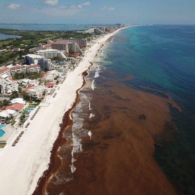 SE VACÍAN PLAYAS POR RECALE MASIVO DE SARGAZO: Playa Delfines y otros balnearios de la Zona Hotelera de Cancún sufrieron por el arribo del alga