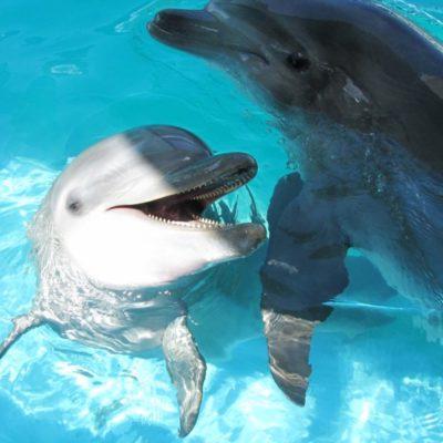 Dolphin Discovery afirma que su principal interés es el bienestar animal