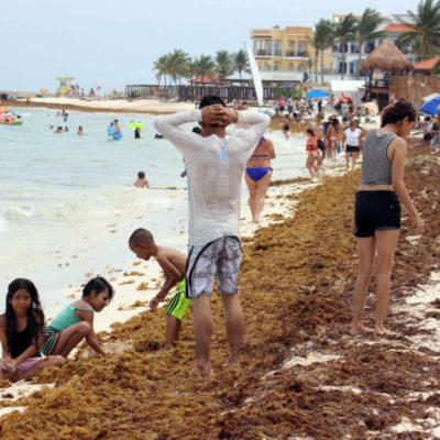 Recepcionan quejas de turistas por sargazo en Cancún, Puerto Morelos y Playa del Carmen, aceptan empresarios