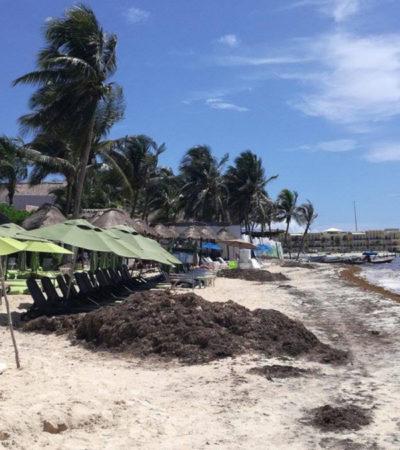 Sargazo continúa afectando la economía de prestadores de servicios turísticos en Playa del Carmen