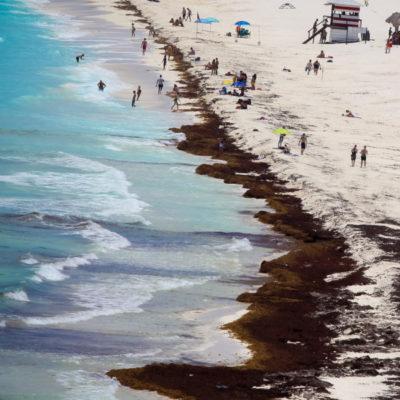 """""""El sargazo comenzó a llegar a Cancún en 2011 y ya es tiempo de tomar decisiones"""", dice científico de la UAM"""