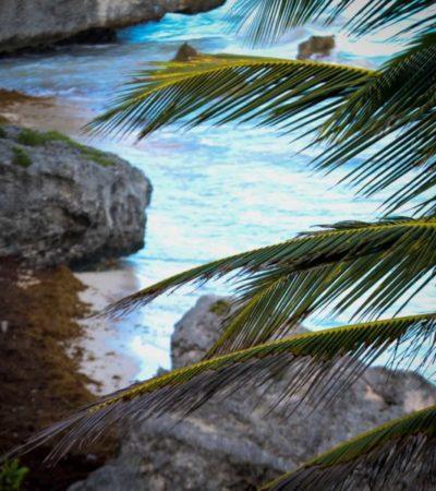 Tulum y Mahahual registraron cancelaciones en restaurantes y servicios turísticos del 25 y 50 por ciento por el sargazo