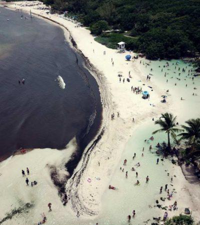 Manchones de sargazo en el océano indican que el problema empeorará, aseguran autoridades municipales de Solidaridad