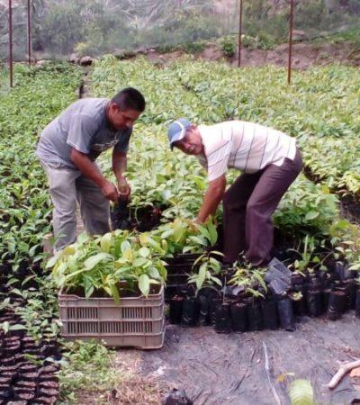 Durante la administración de Laura Fernández se ha beneficiado a más de 100 adultos mayores dedicados a las labores agrícolas, por medio del programa 'El campo en tus manos'