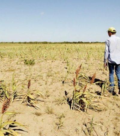 Perdió México en capítulo agropecuario del TLCAN; AMLO 'atado de manos' respecto al campo, dice especialista