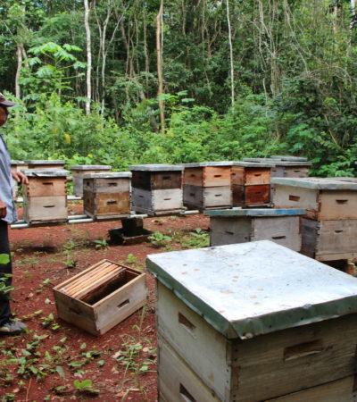 Analizará Sedarpe muerte de abejas en José María Morelos
