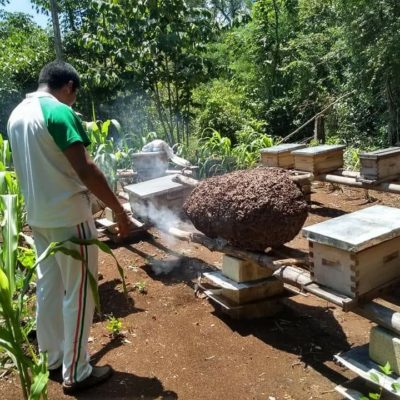Uso irregular de pesticidas pone en riesgo a la apicultura en QR, aseguran campesinos