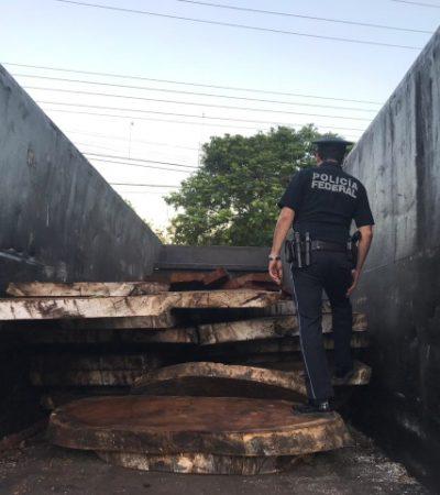 Policía Federal detiene a personas que transportaban madera ilegal en la carretera Reforma Agraria-Tulum
