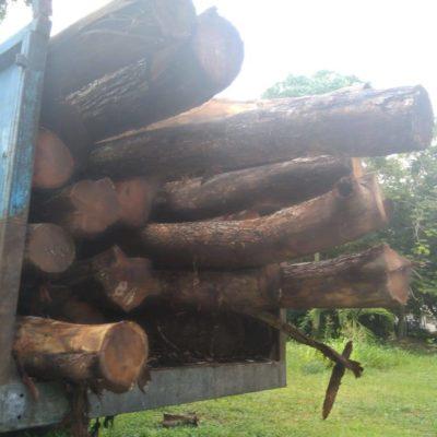 Realiza Profepa peritaje en cargas de madera