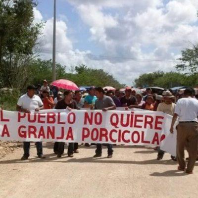 En alerta pobladores de Homún, Yucatán, por 'megagranja' porcícola; el caso aún en tribunales y ya iniciaría operaciones