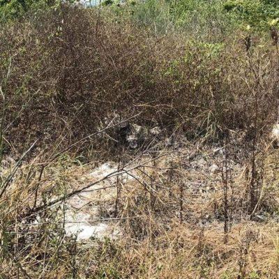 Ambientalistas denuncian vertido de químicos en Tajamar para secar flora
