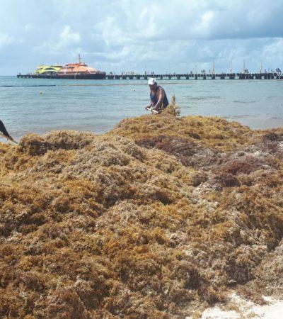 Empresarios aseguran que autoridades municipales y estatales tienen desinterés en un proyecto integral para la contención del sargazo con barcazas