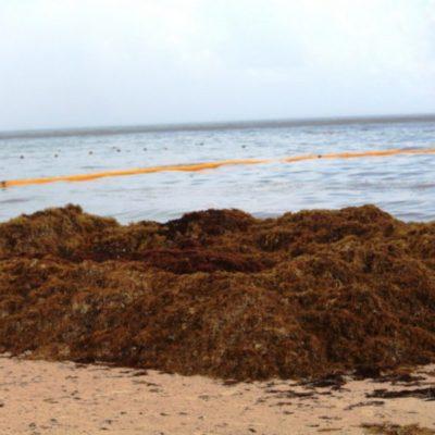Grupo Arco y Dakatso continúan haciendo pruebas, a pesar del recale diario de toneladas de sargazo en Playa del Carmen