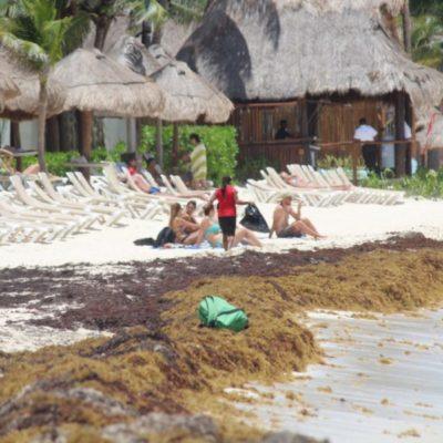 Para evitar la desinformación, la Cofepris iniciará exámenes del agua marina y una campaña informativa sobre las condiciones del mar, debido al sargazo