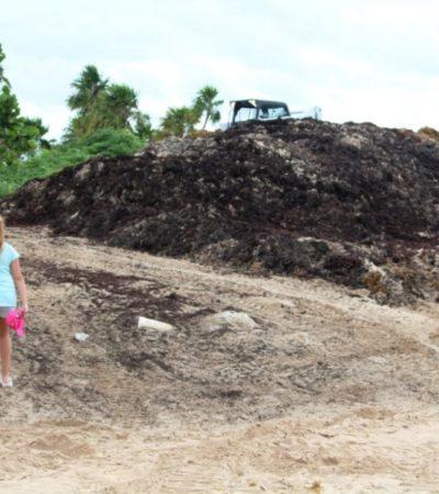 Paradisus cierra el paso a bañistas de la playa 'Blue Flag', con una montaña putrefacta de sargazo