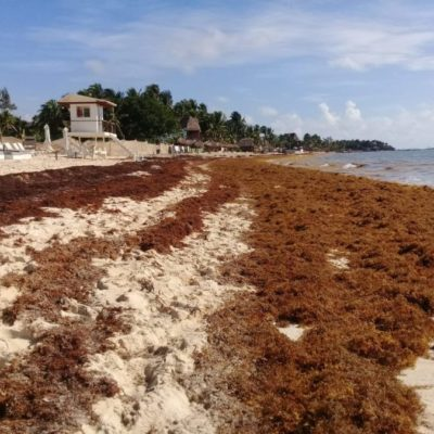 Recalan toneladas de sargazo en Playa del Carmen y empresarios muestran preocupación por posible cancelación de reservaciones hoteleras