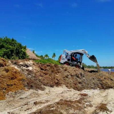 Ante quejas, hotel Paradisus trabaja en la remoción de sargazo acumulado en la playa 88, pero bañistas piden espacio transitable en el arenal; Zofemat pide paciencia