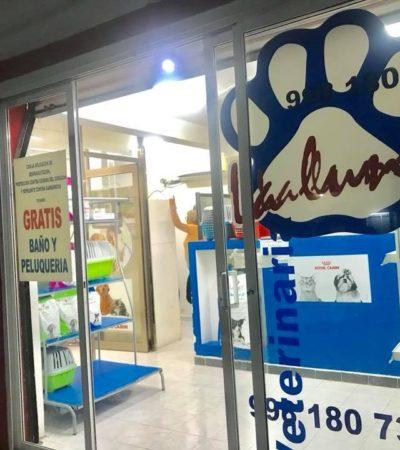 """""""IBA POR UN BAÑO Y LA TERMINÓ MATANDO"""": Acusaciones en redes contra propietaria de un veterinaria por la extraña muerte de una perrita en Cancún"""