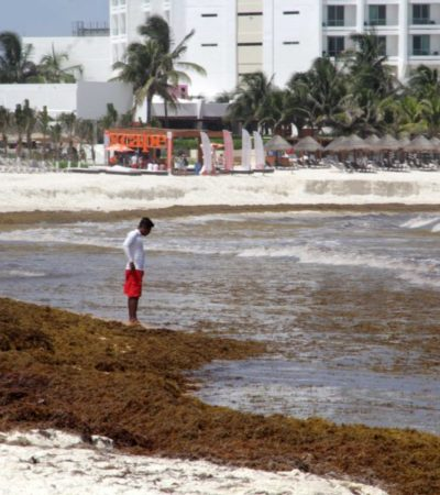 """""""Sí hay afectaciones por el sargazo"""", reiteran empresarios a Marisol Vanegas, titular de Turismo, quien asegura que no hay bajas por el recale excesivo del alga"""