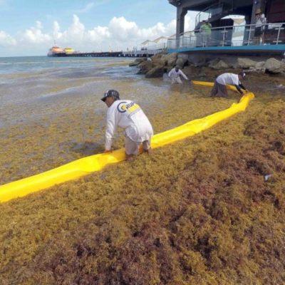 Dice Alfredo Arellano que el arribo de sargazo en Playa del Carmen es porque se están haciendo pruebas y porque existe un retraso en la llegada de barreras antisargazo que serán instaladas
