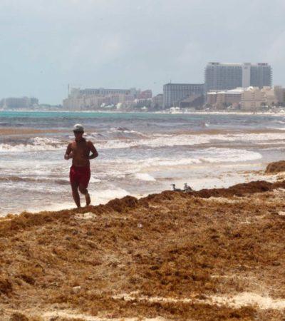 El sargazo y la inseguridad dañan por igual imagen del Caribe mexicano, dicen hoteleros