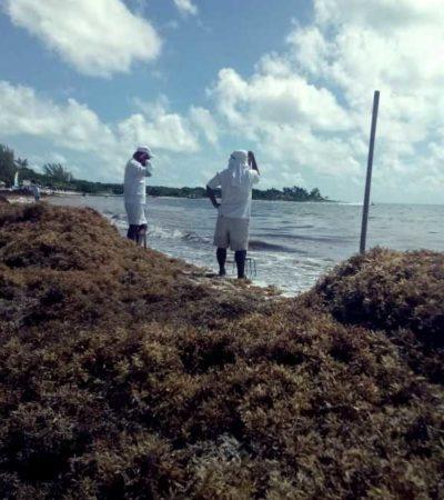 Se aleja Zofemat de playas y trabajadores regresan sargazo al mar