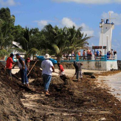 Gobierno de Puerto Morelos continúa trabajando en la limpieza de playas, ante recale de sargazo