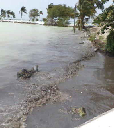 Recomiendan a la población no usar la bahía de Chetumal como espacio de recreación, hasta tener estudios de la calidad del agua