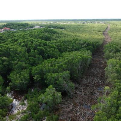 Cárcel y multa de hasta un millón de pesos por daños al manglar de Ría Lagartos en Yucatán