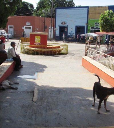 Contagian sarna perros callejeros a dos niños en Peto, Yucatán