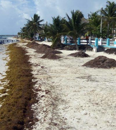 Poco, pero vuelve el sargazo a Puerto Morelos