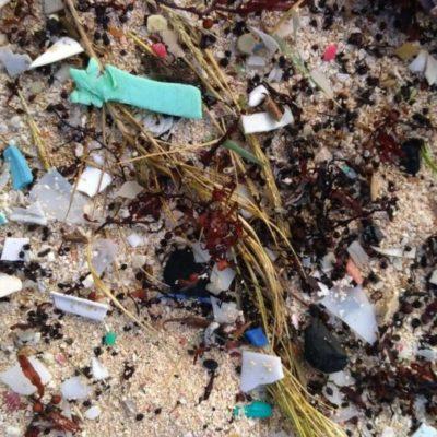 Ciudadanía tiene falta de interés por respetar el medio ambiente y no deja de ensuciar playas de Cozumel, denuncian