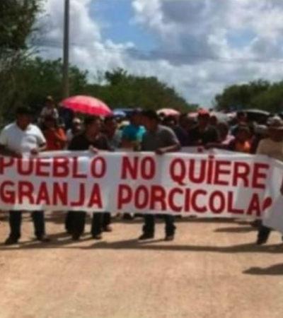 Impide empresa diligencia judicial a 'megagranja' en Homún, Yucatán, por segunda ocasión consecutiva