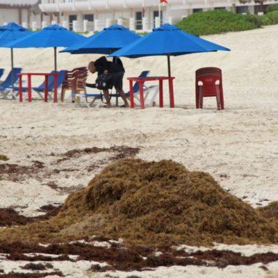 Regresa el sargazo a playa de Cancún