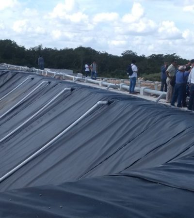 Ordena tribunal retirar 30 mil cerdos de mega granja en Homún, Yucatán