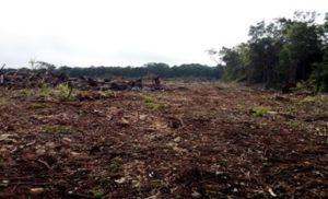 Frena Profepa deforestación en Morelos
