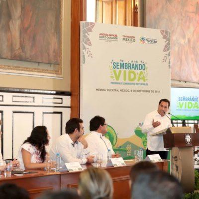 Reforestarán 12 mil 500 hectáreas en Yucatán para detonar empleos e impulsar economía regional