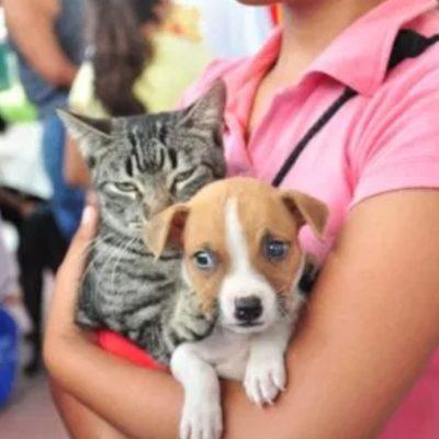 El Cebiam esterilizará perros y gatos en Puerto Aventuras este domingo