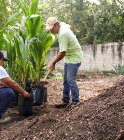 Entregan plantas de coco malayo y criollo a productores de Leona Vicario, Central Vallarta, Delirios y Puerto Morelos